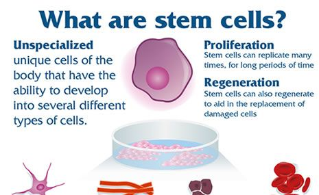 What is a good outline for a biology research paper on stem cells?