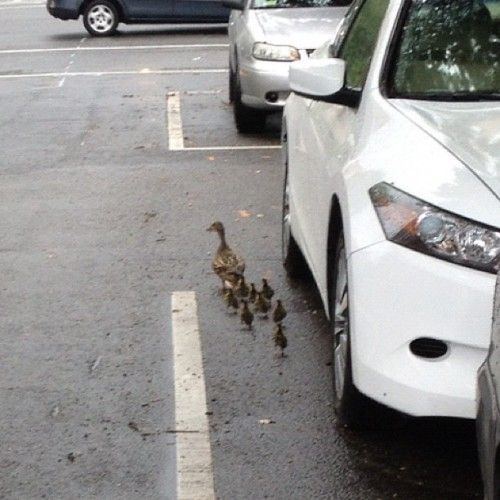 Just another family on the way to Meridian Hill Park.