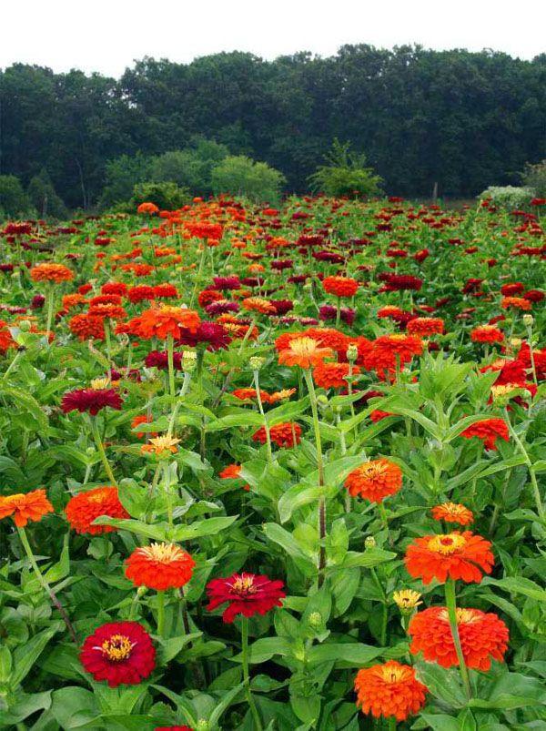 Backyard Flower Farmer : Flirty Fleurs The Florist Blog  Inspiration for Floral Designers