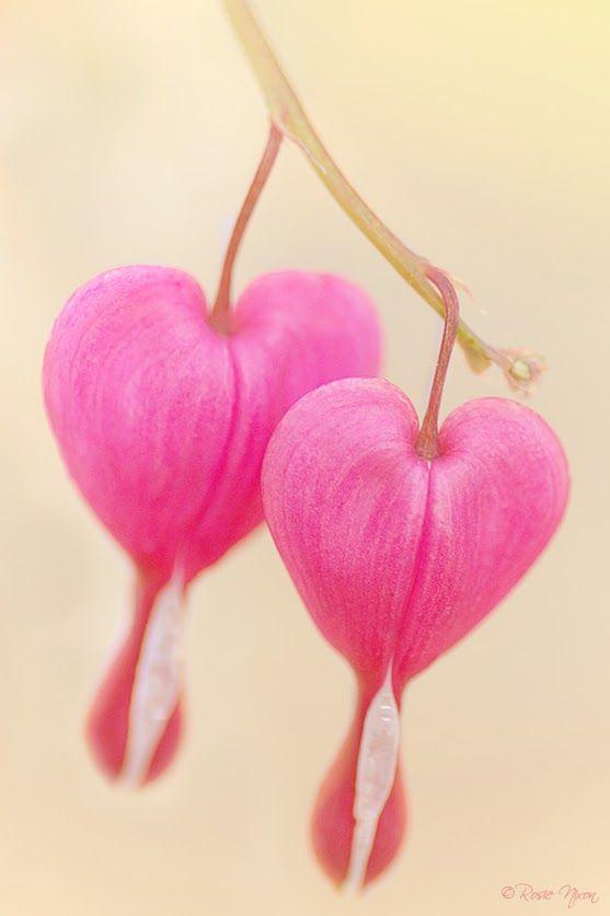 valentine day my name pix