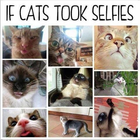 If cats took selfies.