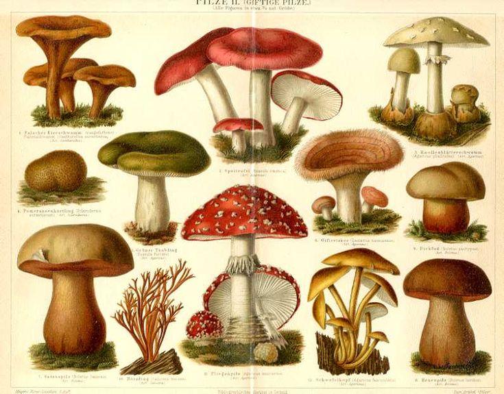.....fungi