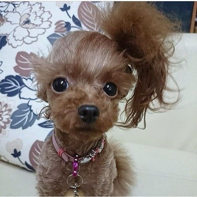 Cute dog with side ponytail | Too CUTE! | Pinterest