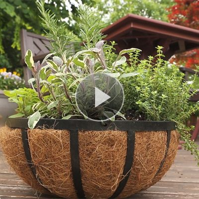 Container gardening herbs for Patio herb garden designs containers