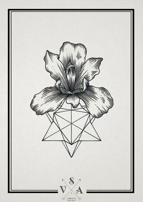Orchid Flower Line Drawing : The gallery for gt geometric line art tumblr