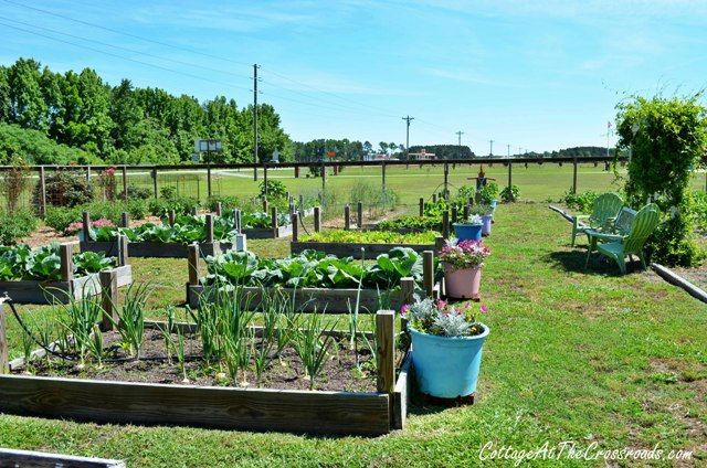 Large vegetable garden raised beds gardening pinterest for Large vegetable garden