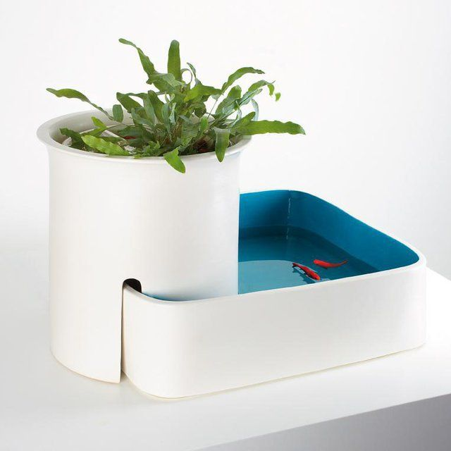 Pinterest discover and save creative ideas for Cool fish bowls