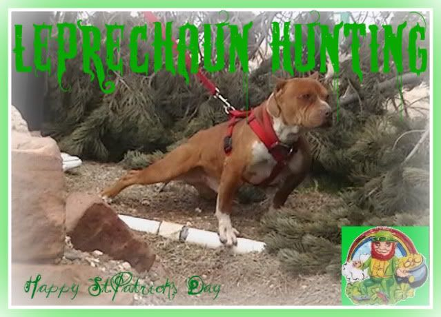 Entries closed poll 2010 st patrick s day contest pitbulls go