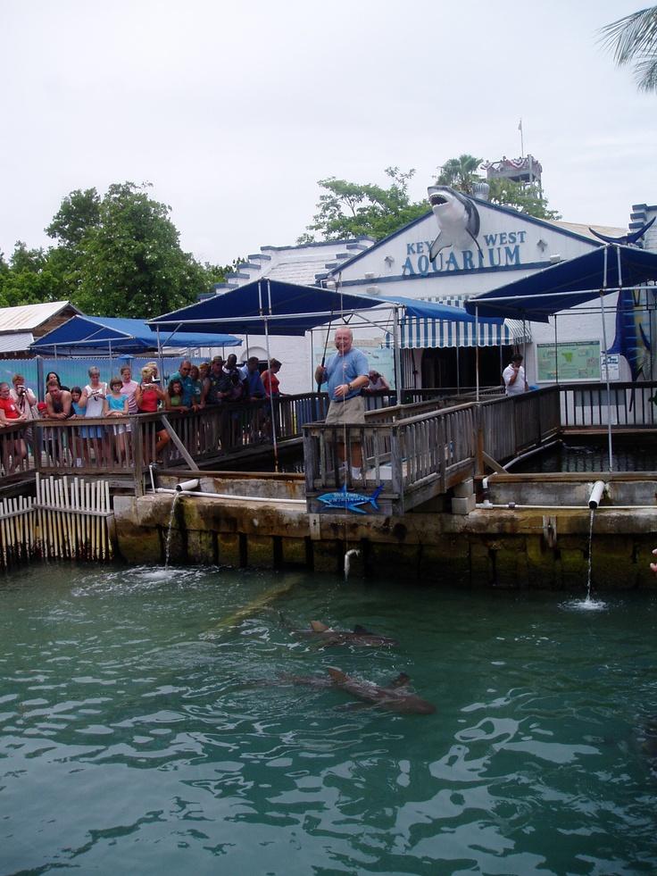 Key West Aquarium Dream Travel Pinterest