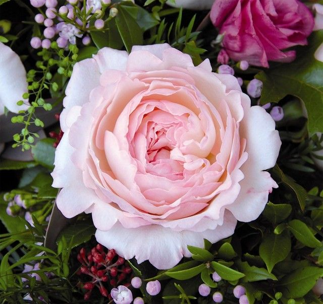 david austin wedding flowers pinterest. Black Bedroom Furniture Sets. Home Design Ideas