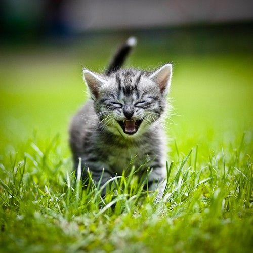 Smiling Cat Here Kitty Kitty Pinterest