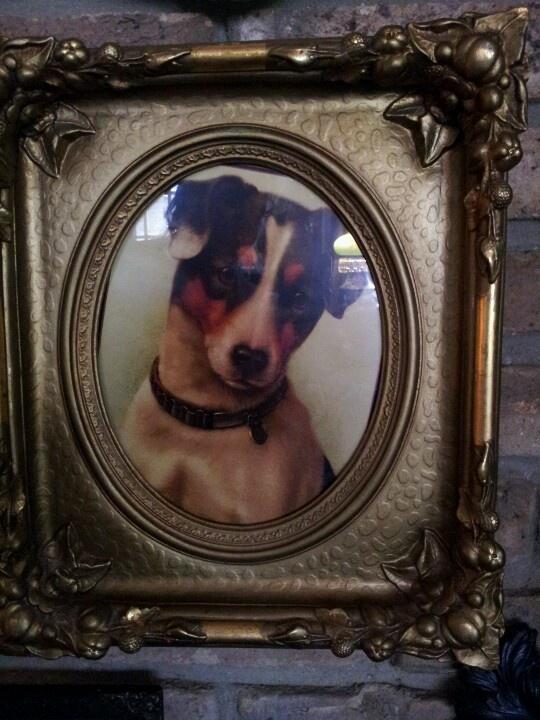 JRT... | Antique Dog | Pinterest