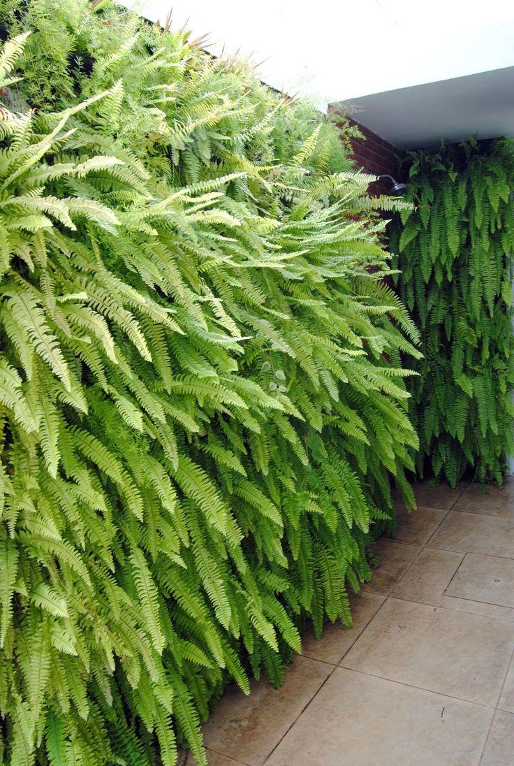 Muro verde verde pinterest for Plantas muro verde