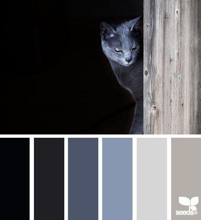 Mystery color combos pinterest - Dark blue room color scheme ...