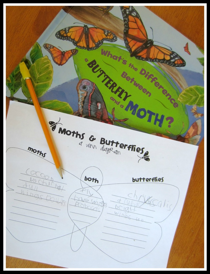 Moths and Butterflies - Another Lesson in Differences from Relentlessly Fun, Deceptively Educational