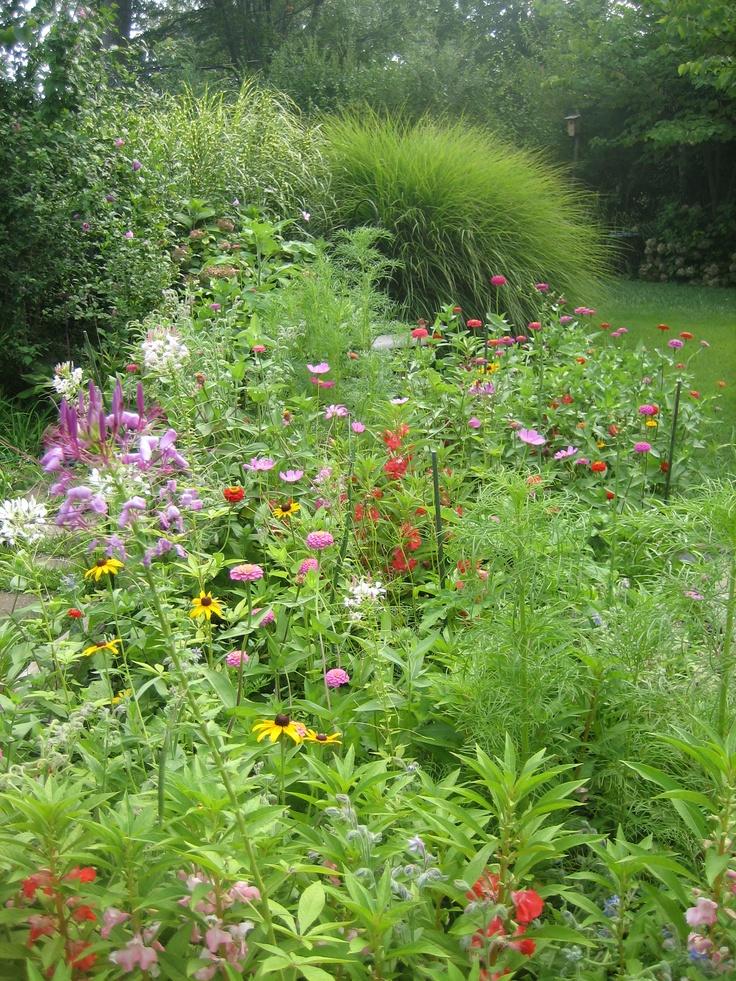 Wild flower garden ideas photograph wildflower garden for Wildflower garden designs