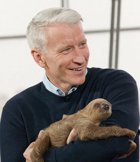 Anderson Cooper and a baby sloth