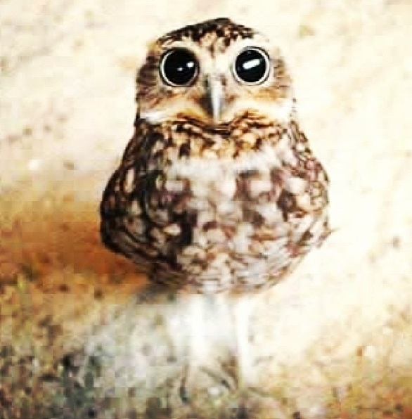 Sad owl is hungwy | Images | Pinterest