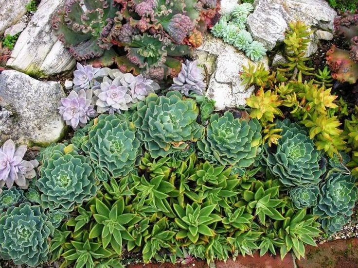 mix of colours and textures garden Design Succulents