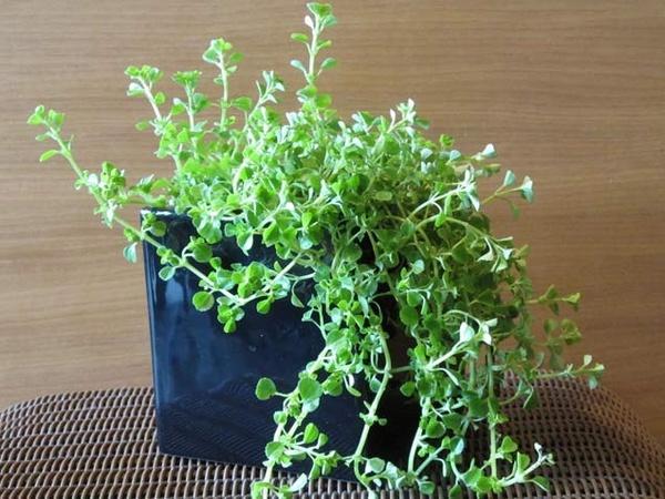 best indoor plants plants indoor pinterest
