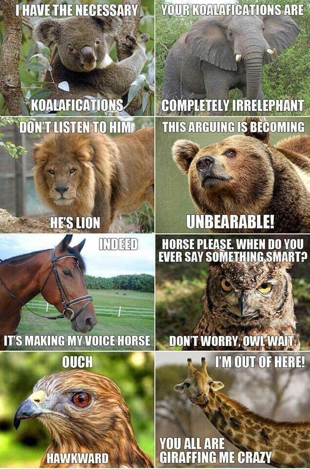 Funny Zoo Memes : Animal lol pinterest