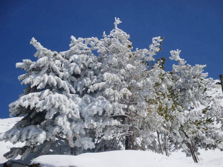 vincci sierra nevada: