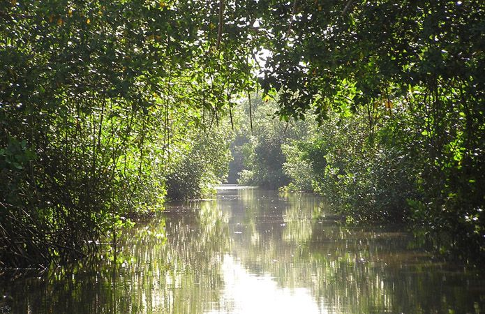 caroni swamp Browse caroni swamp pictures, photos, images, gifs, and videos on photobucket.