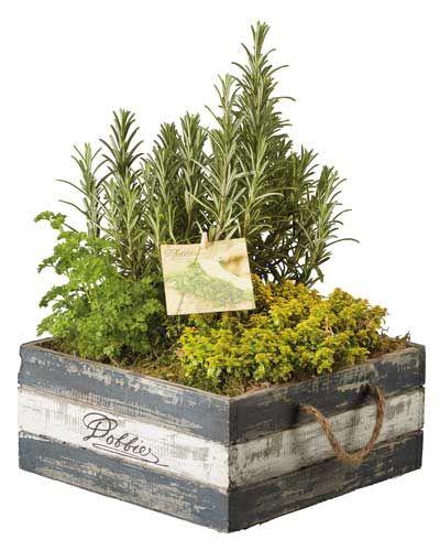 Indoor Herb Garden Indoor Herb Garden Pinterest