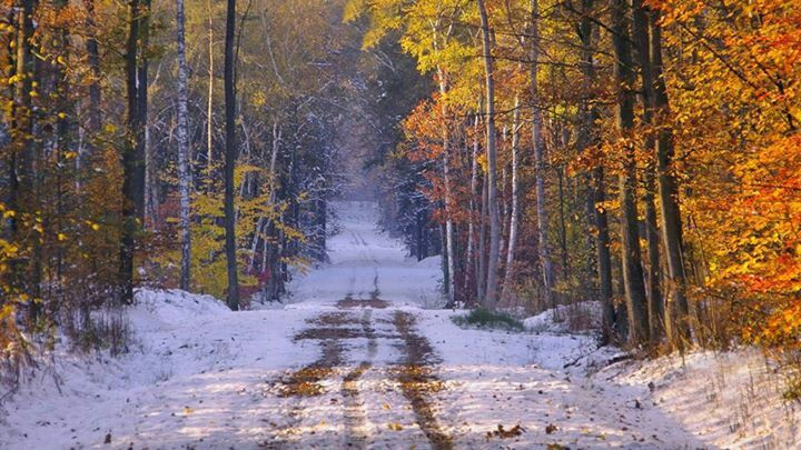 Autumn and Winter Forest