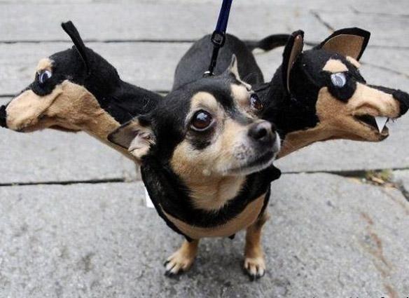 halloween dog costumes superman