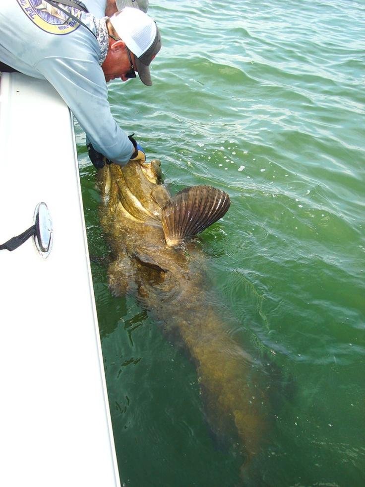 how to catch grouper in the gulf
