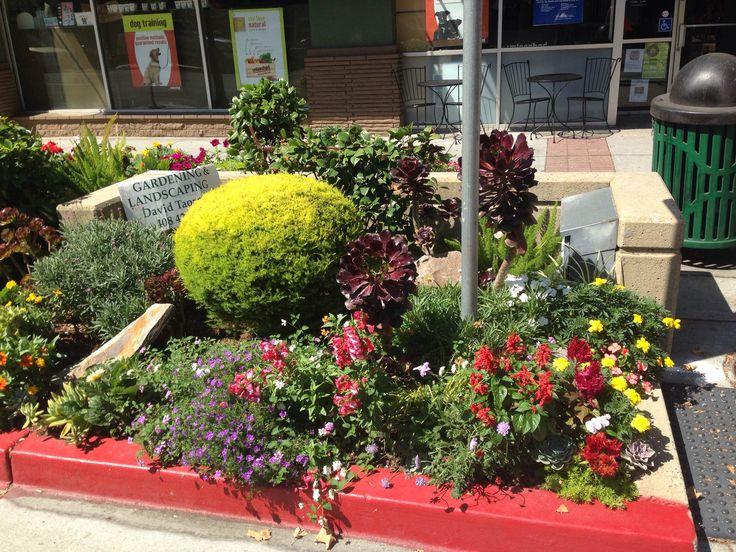 landscaping ideas dawson house remodel pinterest