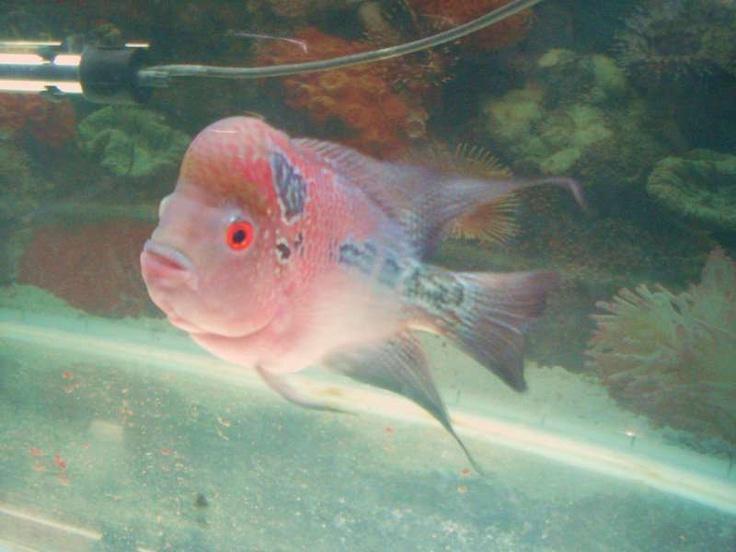 Pretty Fish Fish Pinterest