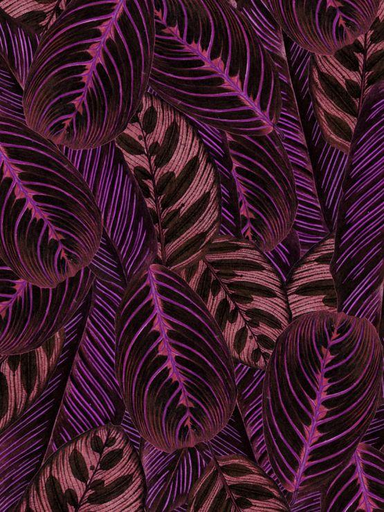 Beautiful leaves of the prayer plant garden pinterest for Prayer palm plant
