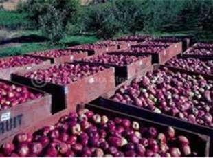 Fresh Apple Salsa | Recipe