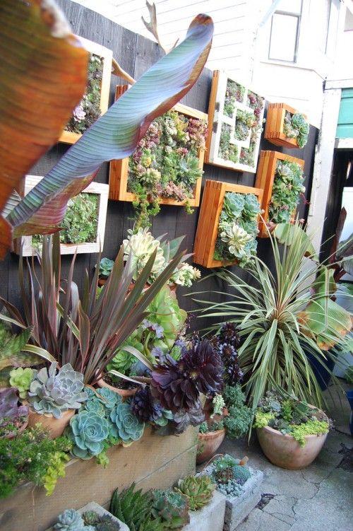 Mini Succulent Gardens Succulents Pinterest