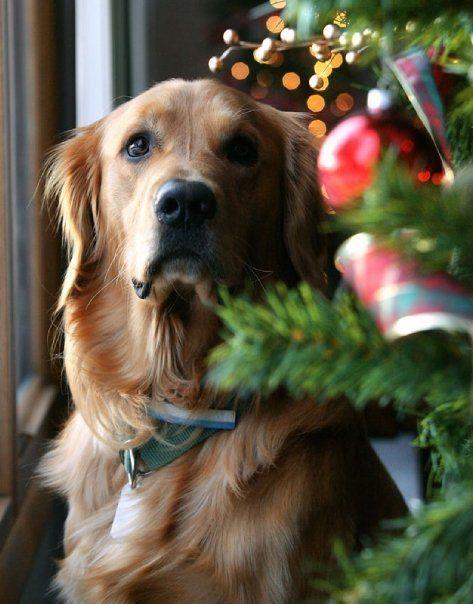 Ένα Golden Χριστουγεννιάτικο...