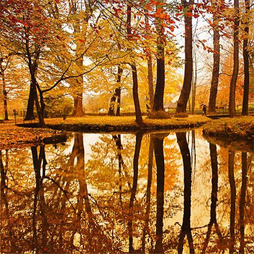 Golden Pond, The Netherlands