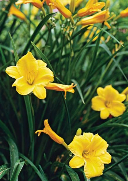 Plant these low maintenance perennials and shrubs for Best easy care outdoor plants