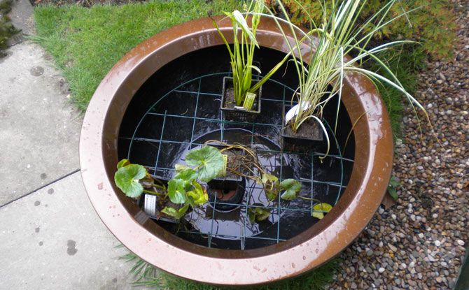 Creating A Container Pond Container Ponds Pinterest