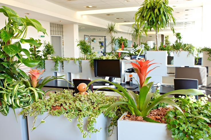 Pin by stephanie fanger on workplace design pinterest - Cool office plants ...