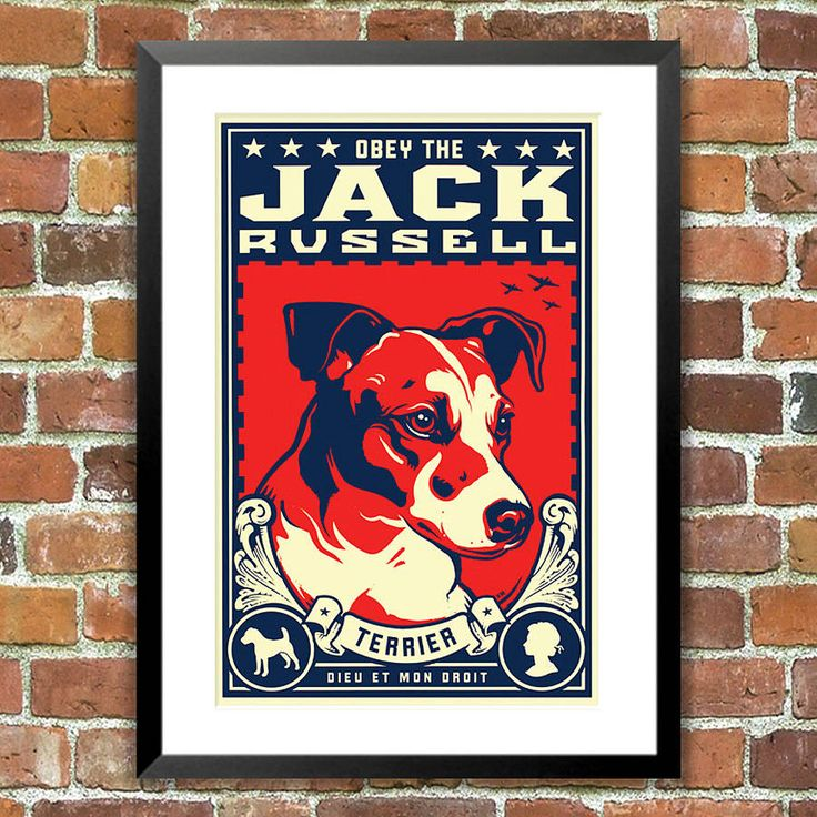 jack russell, obey dog print, for pet lovers by the animal gallery ...