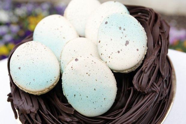 Robin's egg macaroons in a chocolate nest from Bouchon Bakery. Jorgen ...