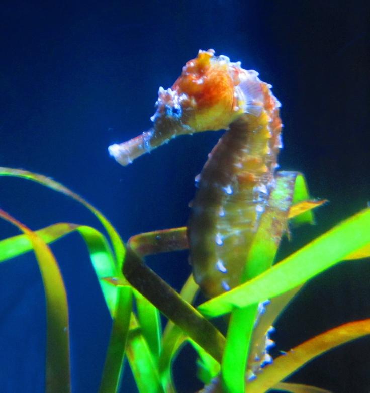 Mystic Aquarium Mystic Aquarium Pinterest
