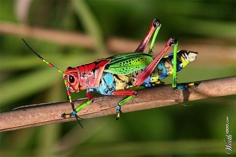Cricket Animal Images - Reverse Search