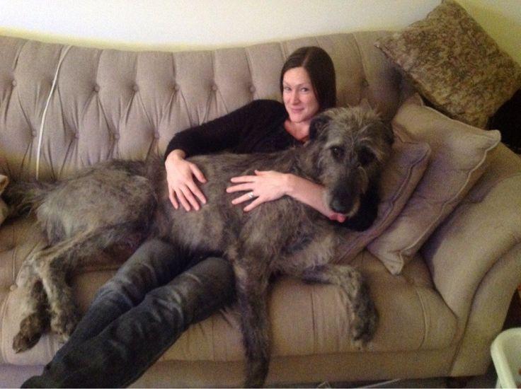 Big Dogs Love Babies