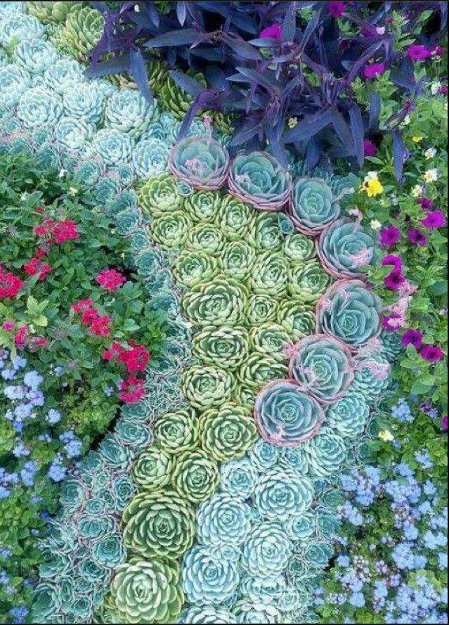 succulents | In the Garden