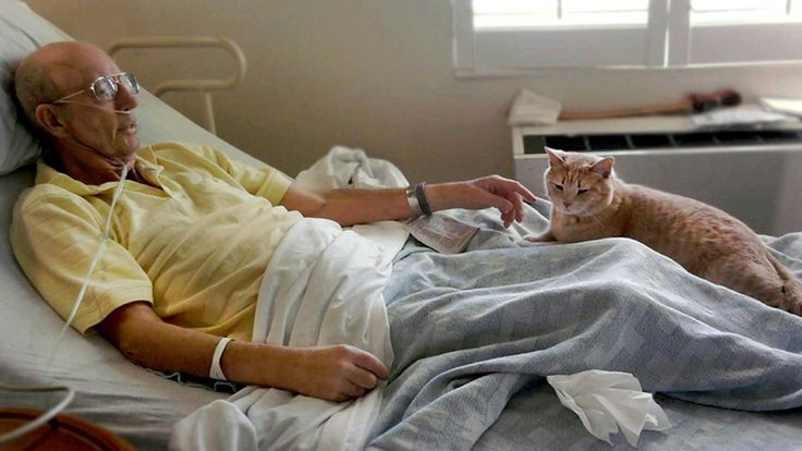 Meet the Cat Who Comforts Nursing Home Patients and Predicts Their Deaths