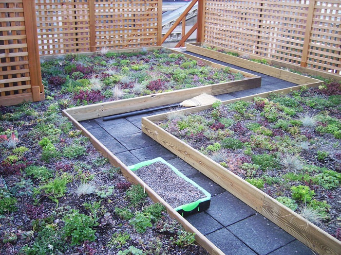 Rooftop vegetable garden  Villa de Family David  Pinterest