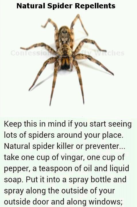 Natural spider repellent remedies safer info pinterest Natural spider repellent